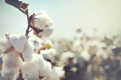cotton_max-550x550