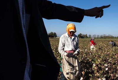 antislavery uzbek cotton