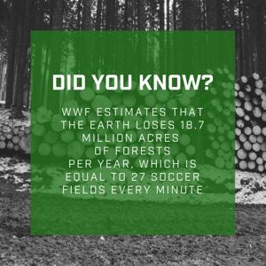 deforestation fact
