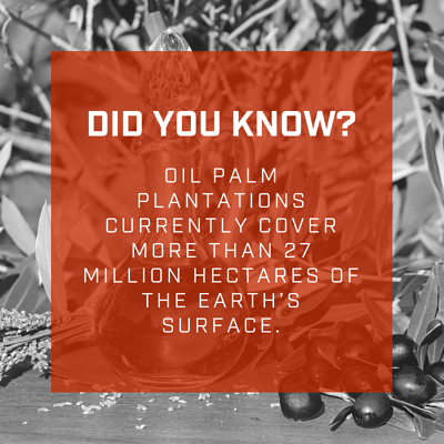 palm oil fact